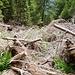Der Untere Weg zur Capanna Sponda ist sehr aufwendig vom Fallholz befreit worden.