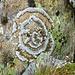 Laune der Natur - Mandala?