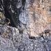 wenige Klettersteig-Gänger, das gefällt den Steinböcken