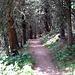 tratto del bel sentiero Roentgen