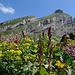 Blumenmeer mit Churfirstenblick