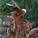 Komischer Tag heute:-) Auch in der Wurzel am Wegesrand sah ich schließlich ein Gesicht mit Hut ...<br /><br />Che strana giornata:-) Anche nella radice accanto al sentiero poi ho visto una faccia con cappello ...