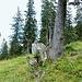 Dieser Baum könnte helfen, die Abzweigung nicht zu übersehen, falls man nicht mit einem GPS mit gutem Kartenmaterial unterwegs ist.
