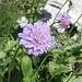 Wer kennt diese Blume?