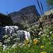 Ecco la più bella dell'Alpe Devero.