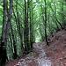 """Il giorno dopo: La mulattiera che da Pigra porta al capanno in località """"Gattone"""", dove un sentierino prosegue poi fino a raggiungere la strada poco prima dell'Alpe di Colonno"""