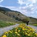 [u Zina] sulla strada forestale, in mezzo ai fiori