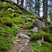 ...geht es jetzt anhaltend steil aufwärts durch den Bergwald.