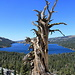 Great Basin Bristlecone Pine (Pinus longaeva), these are known as the oldest living trees in the world. They can live up to 5000 or more years! This one here has probably been dead for hundreds of years already...