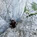 Erste IIIer Passage - Hans am Ausstieg vom Kamin