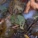 <br /><b>Blätter waschen sich nicht freiwillig....➨➡︎➠➟➙➛⟿<b></b></b>