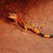 Ein wunderschöner Lizard