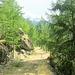 Sonniger Waldweg bei Täsch