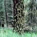 Herrliche Farben im Bergwald
