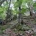 Aufstieg über Wildwechsel und schwächste Spuren