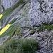Beim Abstieg vom Forstberg Richtung Gross Sternen wurden wir dann doch noch gefordert. Hier ging es dem Felsen lang runter, um dann nach links zur nächsten Schrofenzone zu queren,wo wir die eher hinderlichen Stöcke auf den Rat eines aufsteigenden Berggängers am Rucksack verstauten. Die paar Minuten Zeit sollte man sich nehmen....