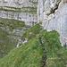 Auch wenn der Weg links einladend unter dem Felsband entlanggeht, ist man linkerhand auf dem Holzweg...