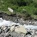die Hochwasserspur ist an der umgelegten Vegetation am Ufer klar erkennbar