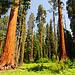 Erste Sicht auf große Bäume