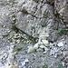 Am Steinmännchen und Bohrhaken (am Fels im Hintergrund sichtbar) ist man richtig.