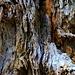 Vermodertes Holz im Wald Malutsch.