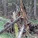 der Wald lebt und stirbt und lebt