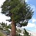 In großer Höhe werden die Bäume kleiner