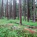 Start im Wald nach Winkelmatten