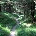 Schöner Waldweg - bald bin ich zurück in Zermatt