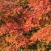 Definitv Herbst auch am Zürisee