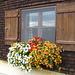 Hinterbergalp mit Blumenfenster