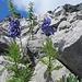 blau vor viel Fels - und blau