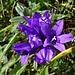 noch eine Blumenschönheit
