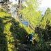 Weite Abschnitte des Aufstiegs geht es dem Rücken entlang mit toller Aussicht und schönen Tiefblicken in das St. Galler Rheintal