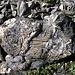Eine fantastische, farbenprächtige Steinwelt zwischen dem Lai Grond und der Fuorcla da Tschitta