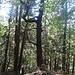 Dort wo  der Hohlweg sich 3teilt steht der Drachenbaum !