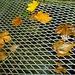 Herrlich kühles Wasser bei der Fassung Promegn auf 1000m. (Auch die Blätter scheinen es zu geniessen).