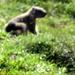 la marmottina zoomata sembra quasi un'orsettina.....