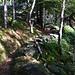Typischer Tessiner Alpweg; beeindruckende Leistung derer, die diese Wunderwerke gebaut haben