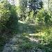 Die Forststrasse auf rund 880m ist erreicht. Zugang zur alten Waldschanze?