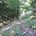 steiler Anstieg auf schönem Waldpfad