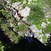 Monarch Creek