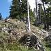 in holprigem Gelände wird der hier bewaldete Grat erreicht