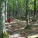 """Nel tratto di bosco percorso """"a vista"""" .... si, a vista del gps."""