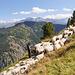 Auf der Belalp warteten wir 700 Schafe ab, die zurück ins Tal geführt wurden.