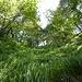 ...bis man hier in diesem wunderbaren Grashang steht. oben wäre der Ausstieg auf den Westwandsporn möglich