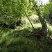 die letzte Stufe: zuerst zum Baum im Vordergrund, dann leicht nach links zum Baum im Mittelgrund und ab dort ziemlich akrobatisch zwischen zwei Wändchen hoch.