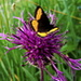 Papillon inconnu...
