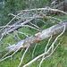 Zum Verzweifeln: überwachsene Wegspur und sperriges Fallholz beim Aufstieg durch den Mulebergwald
