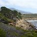 Küstenlinie mit Monterey Cypress